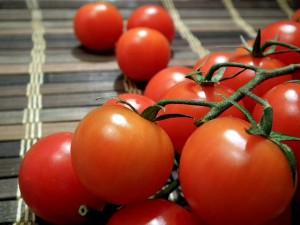 www.michis-tomatensamen.de1