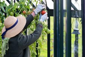Saubere Handschuhe tragen bei der Ernte
