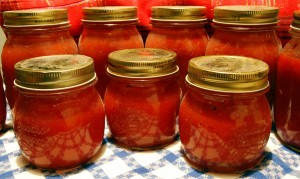 Eingeweckte Tomaten
