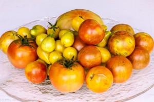 Frisch geerntete Tomaten