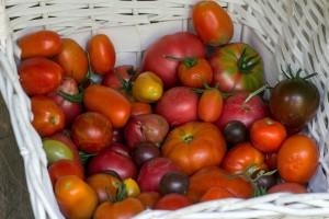 Frische Tomaten im lufdurchläassigen Korb lagern